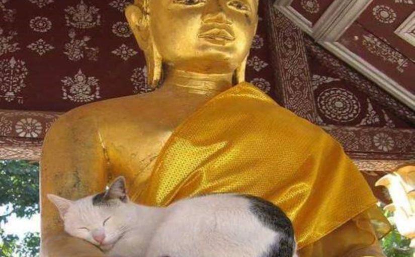 Milano 23 ottobre: Il Buddhismo e gli animali